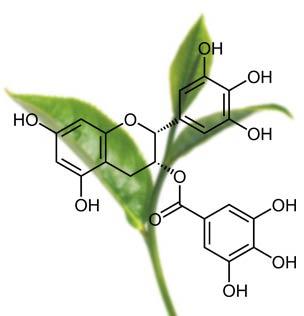 The-vert-EGCG