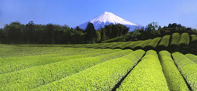 The-vert-Japon-Mont-fuji