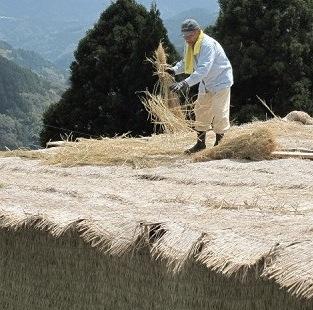 mise-a-lombre-gyokuro