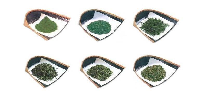 Caféine & L-theanine dans le thé vert