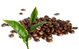 Comparaison-cafeine-mg
