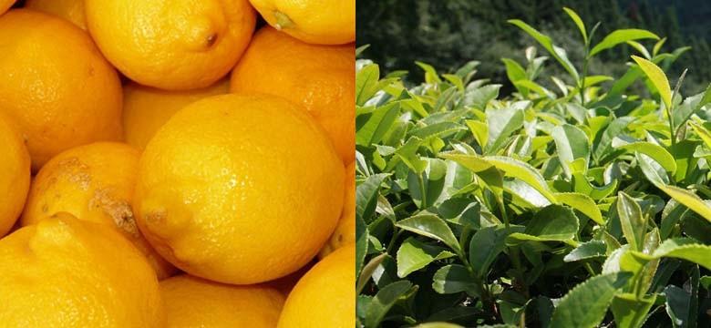 Thé vert et Citron