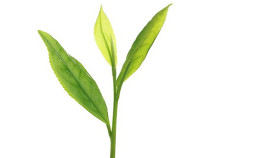 The-vert-cancer