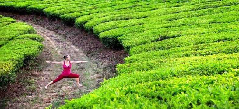 Maigrir avec le thé vert