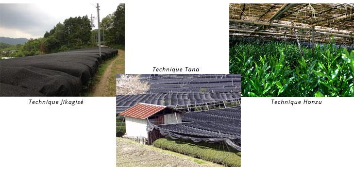 the-dombre-techniques