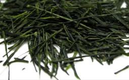 the-vert-sencha-785x360