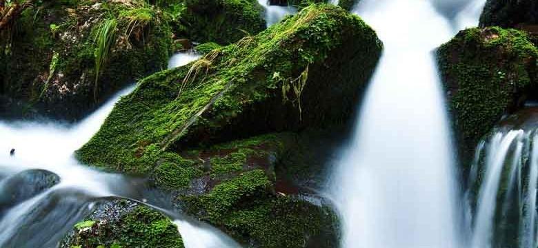 Thé vert: traitement naturel contre les infections urinaires chroniques