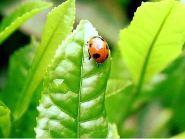 the-vert-bio