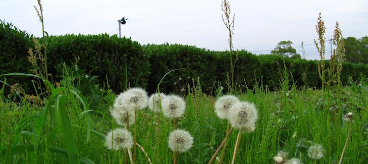 Biodiversité autour des plantations bio (pas d'herbicides)