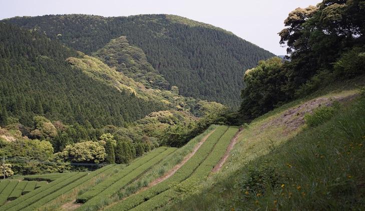 Montagne et champs de thé du Nord de Chiran : paysage digne de peinture