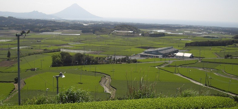 Thé vert de Chiran (Kagoshima)