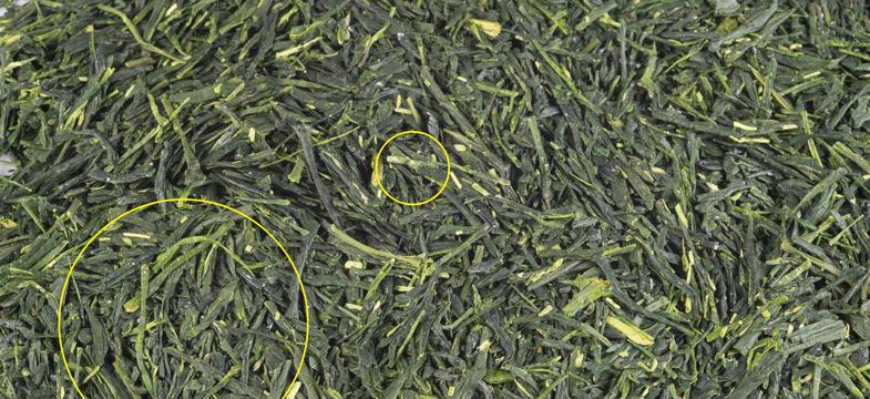 Traces blanches sur le thé vert – Mauvais signe?